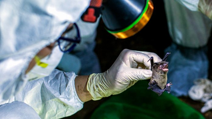 Wuhan scientists admit to being bitten by COVID-19 infected bats, Report