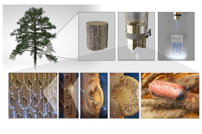 Researchers make filters from tree branches to purify drinking water