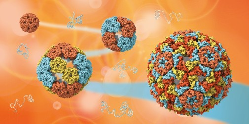 Researchers uncover the mysteries of how viruses evolve