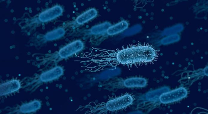 Study: Pathogenic bacteria rendered almost harmless
