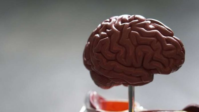 Brain functional connectivity in Tourette syndrome, says study