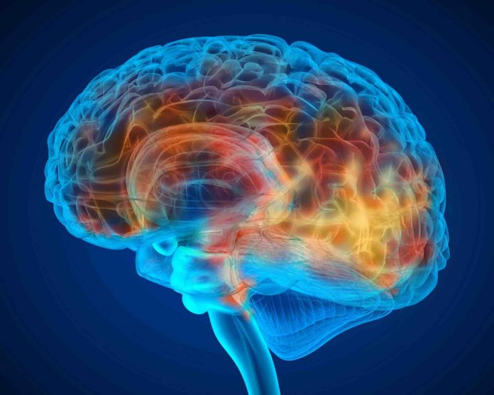 Study: Structures discovered in brain cancer patients can help fight tumors