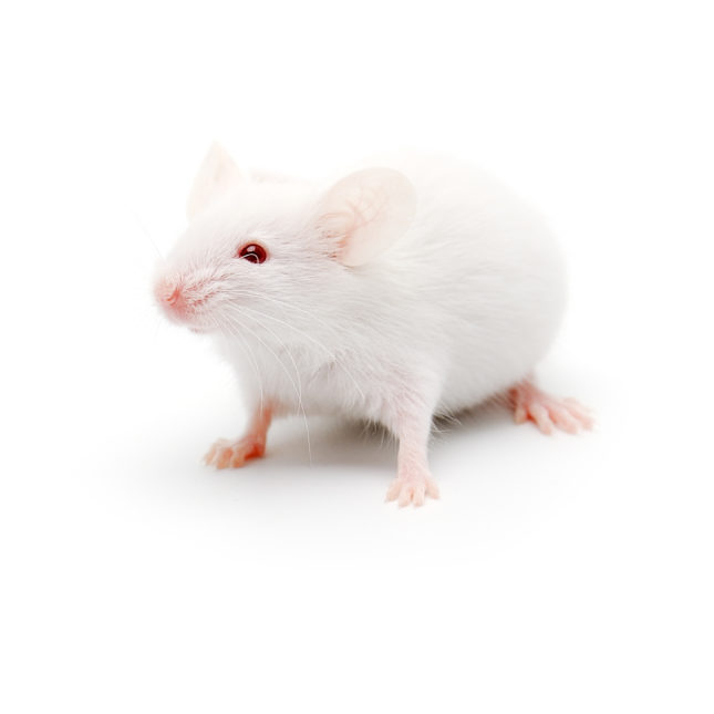 Study: imulated microgravity leads to formaldehyde buildup and movement problems in mice